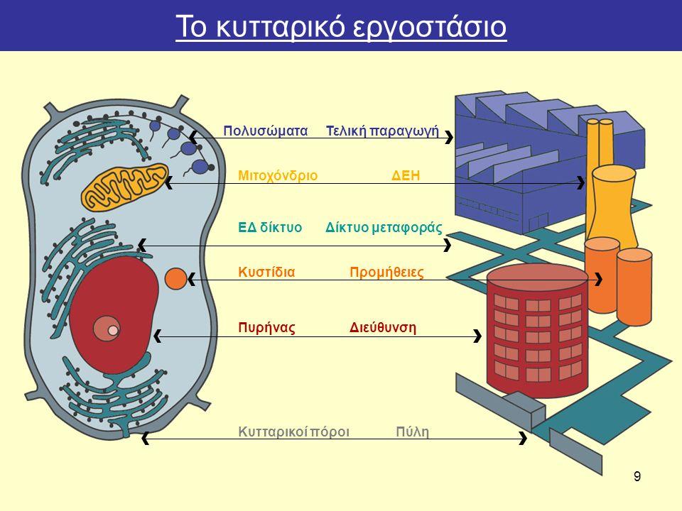 9 Πολυσώματα Mιτοχόνδριο ΕΔ δίκτυο Κυστίδια Πυρήνας Κυτταρικοί πόροι Τελική παραγωγή ΔΕΗ Δίκτυο μεταφοράς Προμήθειες Διεύθυνση Πύλη Το κυτταρικό εργοστάσιο
