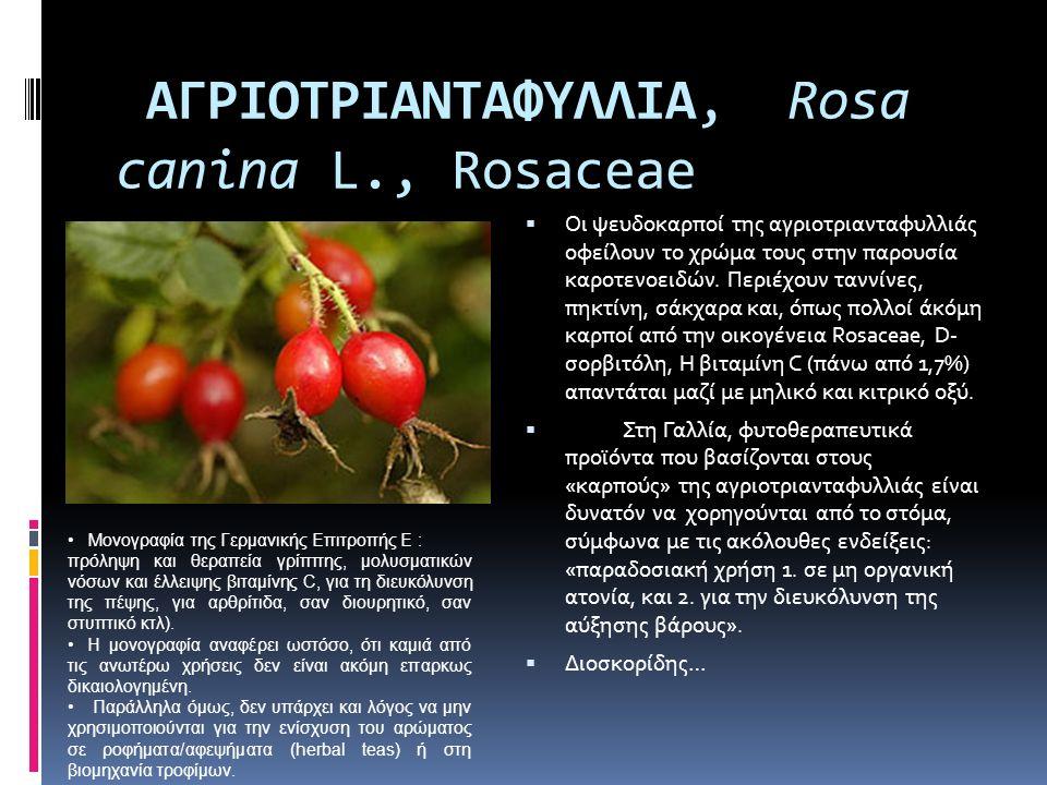 ΑΓΡΙOΤΡΙΑΝΤΑΦΥΛΛΙΑ, Rosa canina L., Rosaceae  Οι ψευδοκαρποί της αγριοτριανταφυλλιάς οφείλουν το χρώμα τους στην παρουσία καροτενοειδών. Περιέχουν τα