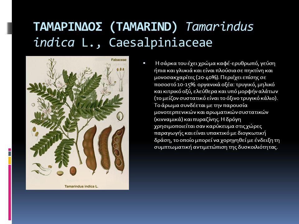 ΤΑΜΑΡΙΝΔΟΣ (TAMARIND) Tamarindus indica L., Caesalpiniaceae  Η σάρκα του έχει χρώμα καφέ-ερυθρωπό, γεύση ήπια και γλυκιά και είναι πλούσια σε πηκτίνη