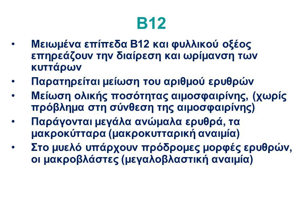 Β12 Μειωμένα επίπεδα Β12 και φυλλικού οξέος επηρεάζουν την διαίρεση και ωρίμανση των κυττάρων Παρατηρείται μείωση του αριθμού ερυθρών Μείωση ολικής ποσότητας αιμοσφαιρίνης, (χωρίς πρόβλημα στη σύνθεση της αιμοσφαιρίνης) Παράγονται μεγάλα ανώμαλα ερυθρά, τα μακροκύτταρα (μακροκυτταρική αναιμία) Στο μυελό υπάρχουν πρόδρομες μορφές ερυθρών, οι μακροβλάστες (μεγαλοβλαστική αναιμία)