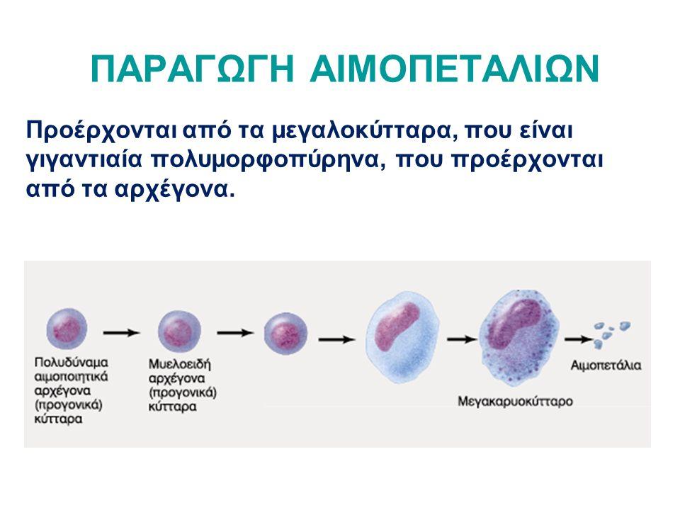 ΠΑΡΑΓΩΓΗ ΑΙΜΟΠΕΤΑΛΙΩΝ Προέρχονται από τα μεγαλοκύτταρα, που είναι γιγαντιαία πολυμορφοπύρηνα, που προέρχονται από τα αρχέγονα.