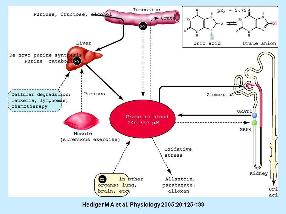 . Hediger M A et al. Physiology 2005;20:125-133