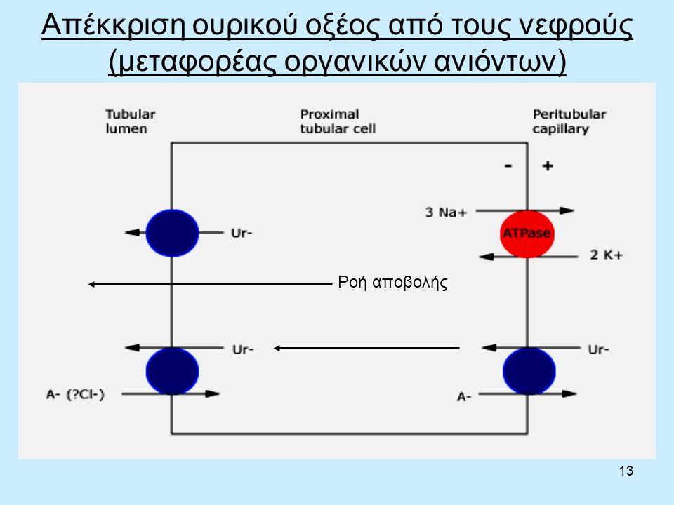 13 Απέκκριση ουρικού οξέος από τους νεφρούς (μεταφορέας οργανικών ανιόντων) Ροή αποβολής