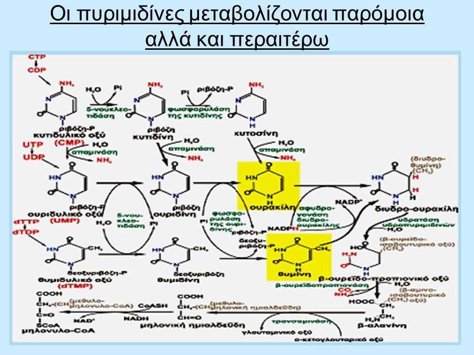 66 Οι πυριμιδίνες μεταβολίζονται παρόμοια αλλά και περαιτέρω