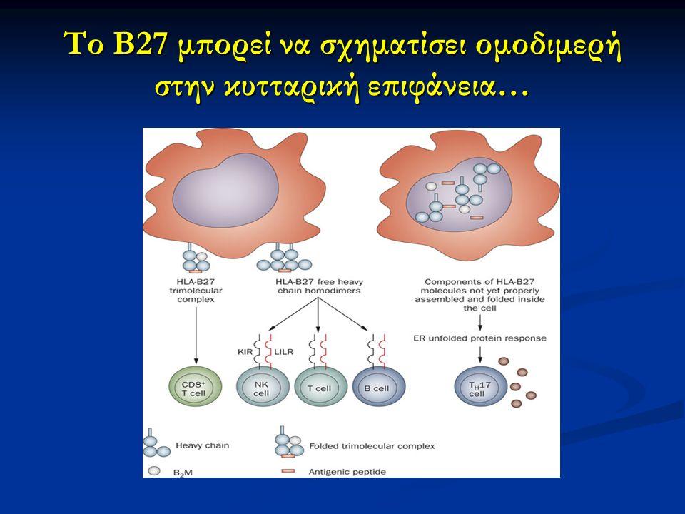 Το Β27 μπορεί να σχηματίσει ομοδιμερή στην κυτταρική επιφάνεια…