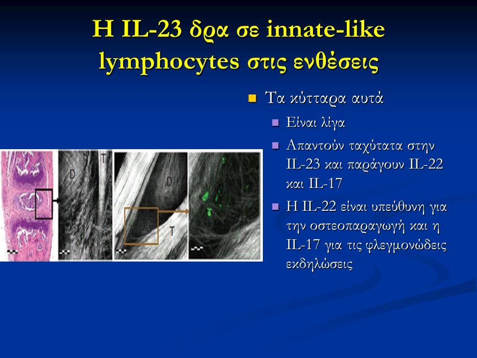 Η IL-23 δρα σε innate-like lymphocytes στις ενθέσεις Τα κύτταρα αυτά Είναι λίγα Απαντούν ταχύτατα στην IL-23 και παράγουν IL-22 και IL-17 Η IL-22 είνα