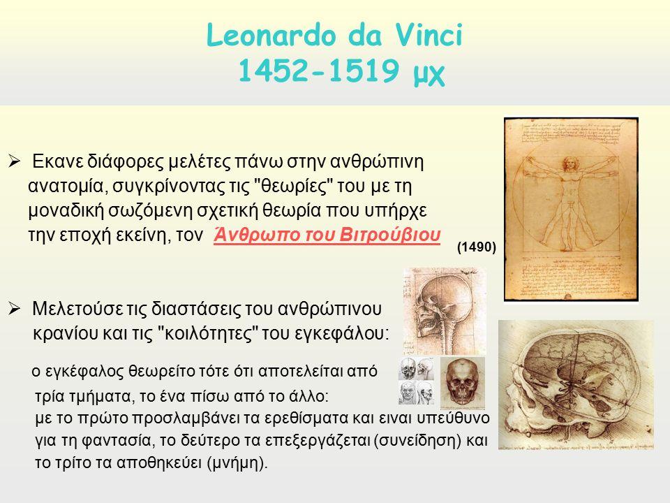  Εκανε διάφορες μελέτες πάνω στην ανθρώπινη ανατομία, συγκρίνοντας τις θεωρίες του με τη μοναδική σωζόμενη σχετική θεωρία που υπήρχε την εποχή εκείνη, τον Άνθρωπο του ΒιτρούβιουΆνθρωπο του Βιτρούβιου  Μελετούσε τις διαστάσεις του ανθρώπινου κρανίου και τις κοιλότητες του εγκεφάλου: ο εγκέφαλος θεωρείτο τότε ότι αποτελείται από τρία τμήματα, το ένα πίσω από το άλλο: με το πρώτο προσλαμβάνει τα ερεθίσματα και ειναι υπεύθυνο για τη φαντασία, το δεύτερο τα επεξεργάζεται (συνείδηση) και το τρίτο τα αποθηκεύει (μνήμη).