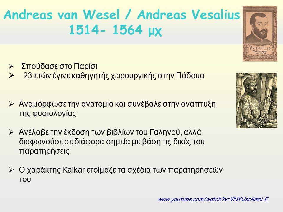  Σπούδασε στο Παρίσι  23 ετών έγινε καθηγητής χειρουργικής στην Πάδουα  Αναμόρφωσε την ανατομία και συνέβαλε στην ανάπτυξη της φυσιολογίας  Aνέλαβε την έκδοση των βιβλίων του Γαληνού, αλλά διαφωνούσε σε διάφορα σημεία με βάση τις δικές του παρατηρήσεις  Ο χαράκτης Kalkar ετοίμαζε τα σχέδια των παρατηρήσεών του Andreas van Wesel / Andreas Vesalius 1514- 1564 μχ www.youtube.com/watch v=VNYUsc4moLE