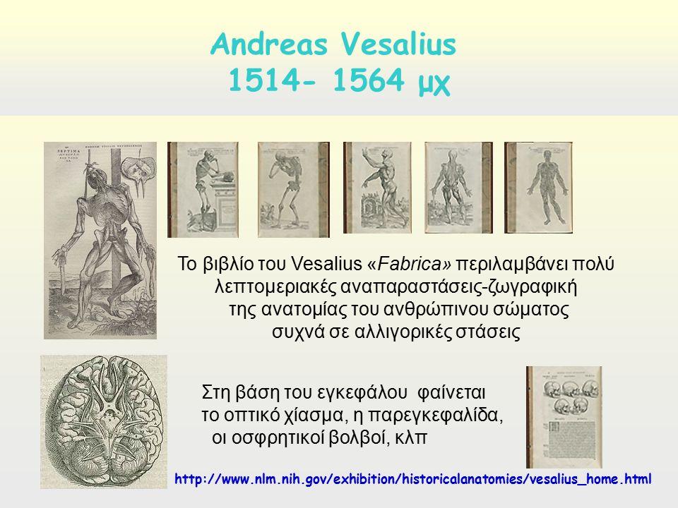 De hymani corporis fabrika, A. Vesalius Andreas Vesalius 1514- 1564 μχ Το βιβλίο του Vesalius «Fabrica» περιλαμβάνει πολύ λεπτομεριακές αναπαραστάσεις