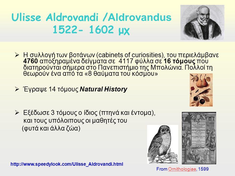  Η συλλογή των βοτάνων (cabinets of curiosities), του περιελάμβανε 4760 αποξηραμένα δείγματα σε 4117 φύλλα σε 16 τόμους που διατηρούνται σήμερα στο Π