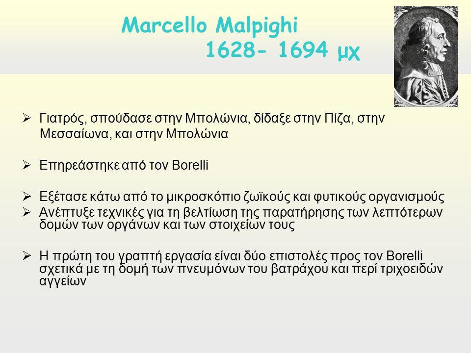  Γιατρός, σπούδασε στην Μπολώνια, δίδαξε στην Πίζα, στην Μεσσαίωνα, και στην Μπολώνια  Επηρεάστηκε από τον Borelli  Εξέτασε κάτω από το μικροσκόπιο ζωϊκούς και φυτικούς οργανισμούς  Ανέπτυξε τεχνικές για τη βελτίωση της παρατήρησης των λεπτότερων δομών των οργάνων και των στοιχείων τους  Η πρώτη του γραπτή εργασία είναι δύο επιστολές προς τον Borelli σχετικά με τη δομή των πνευμόνων του βατράχου και περί τριχοειδών αγγείων Marcello Malpighi 1628- 1694 μχ