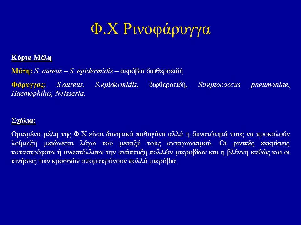 Φ.Χ Ρινοφάρυγγα Κύρια Μέλη Μύτη: Μύτη: S. aureus – S. epidermidis – αερόβια διφθεροειδή Φάρυγγας: Φάρυγγας: S.aureus, S.epidermidis, διφθεροειδή, Stre