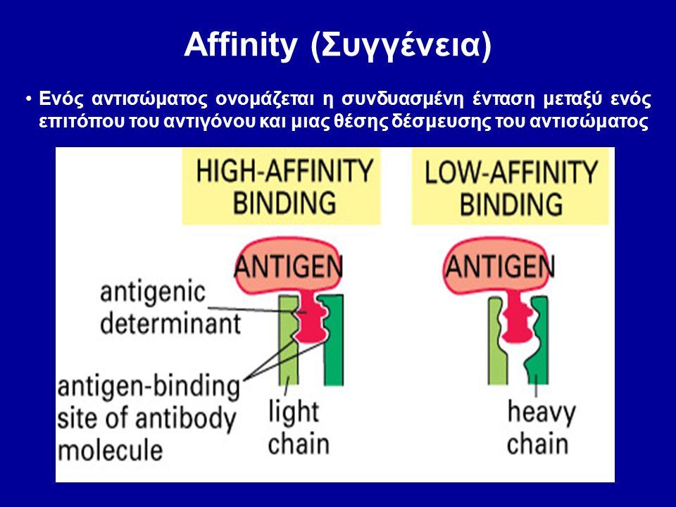 Affinity (Συγγένεια) Ενός αντισώματος ονομάζεται η συνδυασμένη ένταση μεταξύ ενός επιτόπου του αντιγόνου και μιας θέσης δέσμευσης του αντισώματος