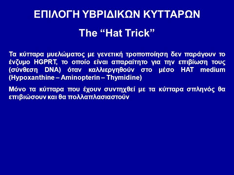 ΕΠΙΛΟΓΗ ΥΒΡΙΔΙΚΩΝ ΚΥΤΤΑΡΩΝ The Hat Trick Τα κύτταρα μυελώματος με γενετική τροποποίηση δεν παράγουν το ένζυμο HGPRT, το οποίο είναι απαραίτητο για την επιβίωση τους (σύνθεση DNA) όταν καλλιεργηθούν στο μέσο HAT medium (Hypoxanthine – Aminopterin – Thymidine) Μόνο τα κύτταρα που έχουν συντηχθεί με τα κύτταρα σπληνός θα επιβιώσουν και θα πολλαπλασιαστούν