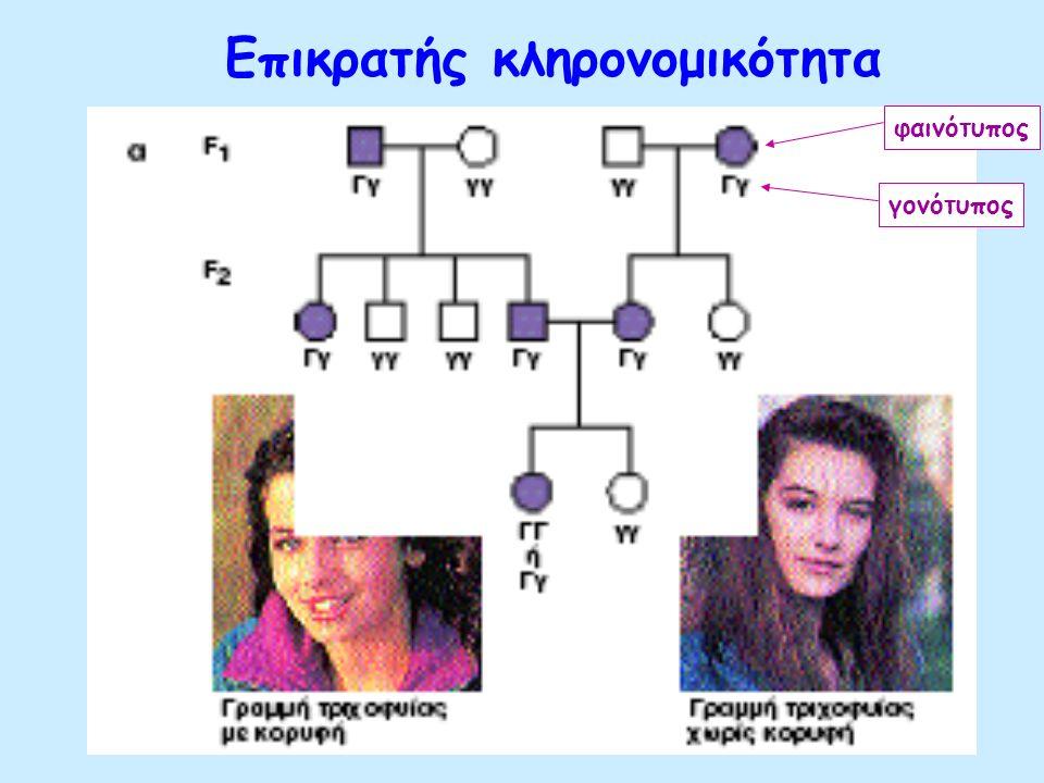 Γενεαλογικά δέντρα