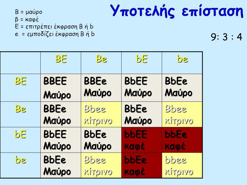 Υποτελής επίσταση Αριστερά: Μαύρο λαμπραντόρ, γονότυπος B/– E/–. Μέση: Κίτρινο λαμπραντόρ, γονότυπος –/– e/e. Δεξιά: Σοκολατί λαμπραντόρ, γονότυπος b/