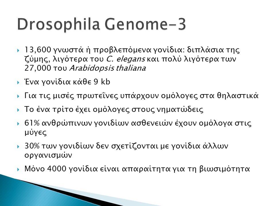  13,600 γνωστά ή προβλεπόμενα γονίδια: διπλάσια της ζύμης, λιγότερα του C.