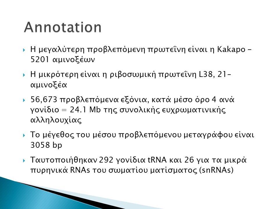  Η μεγαλύτερη προβλεπόμενη πρωτεΐνη είναι η Kakapo - 5201 αμινοξέων  Η μικρότερη είναι η ριβοσωμική πρωτεΐνη L38, 21– αμινοξέα  56,673 προβλεπόμενα εξόνια, κατά μέσο όρο 4 ανά γονίδιο = 24.1 Mb της συνολικής ευχρωματινικής αλληλουχίας  Το μέγεθος του μέσου προβλεπόμενου μεταγράφου είναι 3058 bp  Ταυτοποιήθηκαν 292 γονίδια tRNA και 26 για τα μικρά πυρηνικά RNAs του σωματίου ματίσματος (snRNAs)