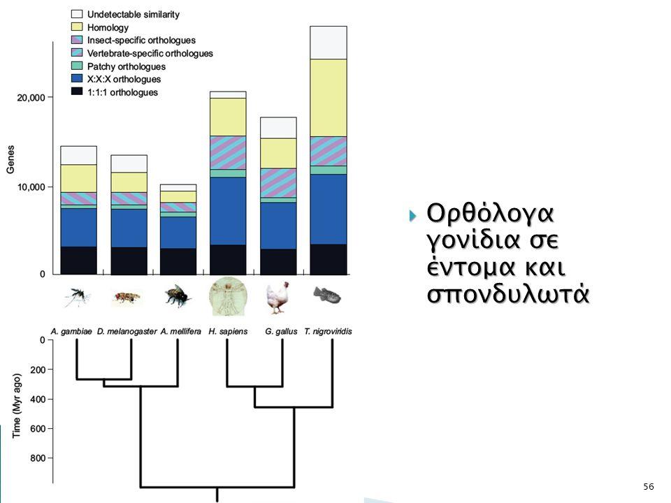  Ορθόλογα γονίδια σε έντομα και σπονδυλωτά 56