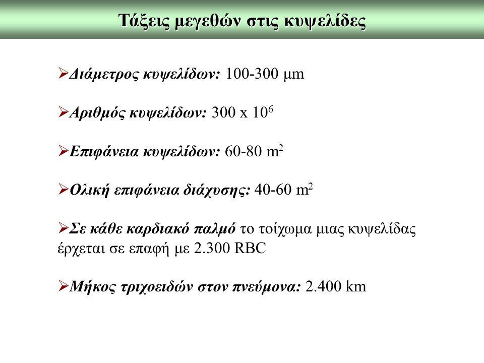 Τάξεις μεγεθών στις κυψελίδες  Διάμετρος κυψελίδων: 100-300 μm  Αριθμός κυψελίδων: 300 x 10 6  Επιφάνεια κυψελίδων: 60-80 m 2  Ολική επιφάνεια διά