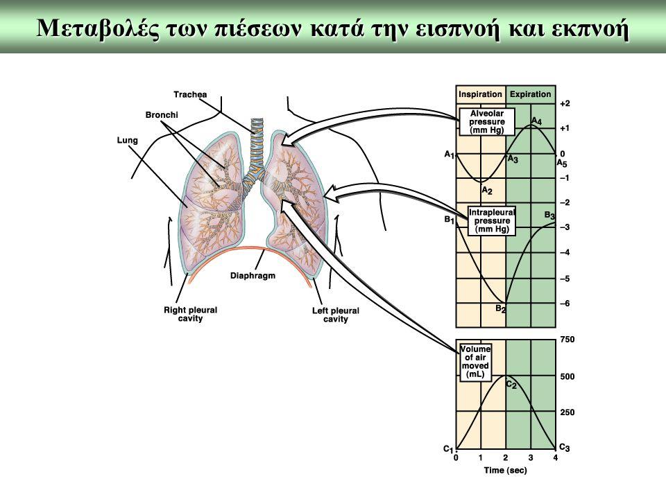 Μεταβολές των πιέσεων κατά την εισπνοή και εκπνοή