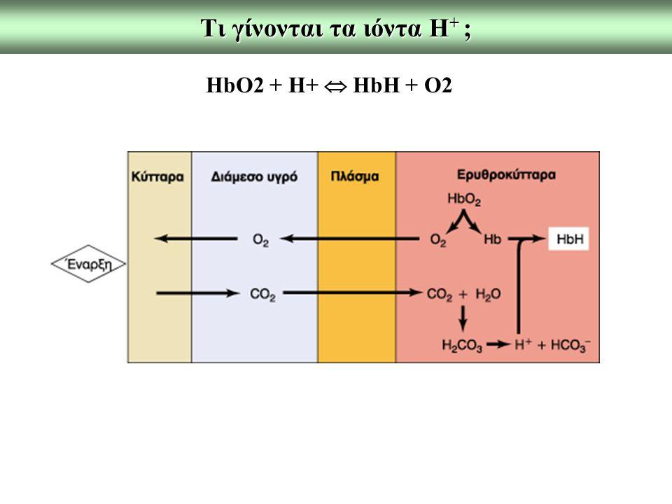 Tι γίνονται τα ιόντα Η + ; ΗbO2 + H+  HbH + O2