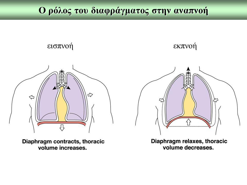 Νόμος του Boyle Τ = σταθερή όπου: F=η ροή του όγκου του αέρα Patm=ατμοσφαιρική πίεση Palv=κυψελιδική πίεση R=αντίσταση των αεραγωγών Όμως στην επιφάνεια των πνευμόνων δεν υπάρχουν μύες.