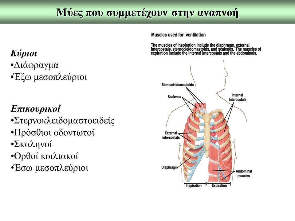 Μύες που συμμετέχουν στην αναπνοή Κύριοι Διάφραγμα Έξω μεσοπλεύριοι Επικουρικοί Στερνοκλειδομαστοειδείς Πρόσθιοι οδοντωτοί Σκαληνοί Ορθοί κοιλιακοί Έσω μεσοπλεύριοι