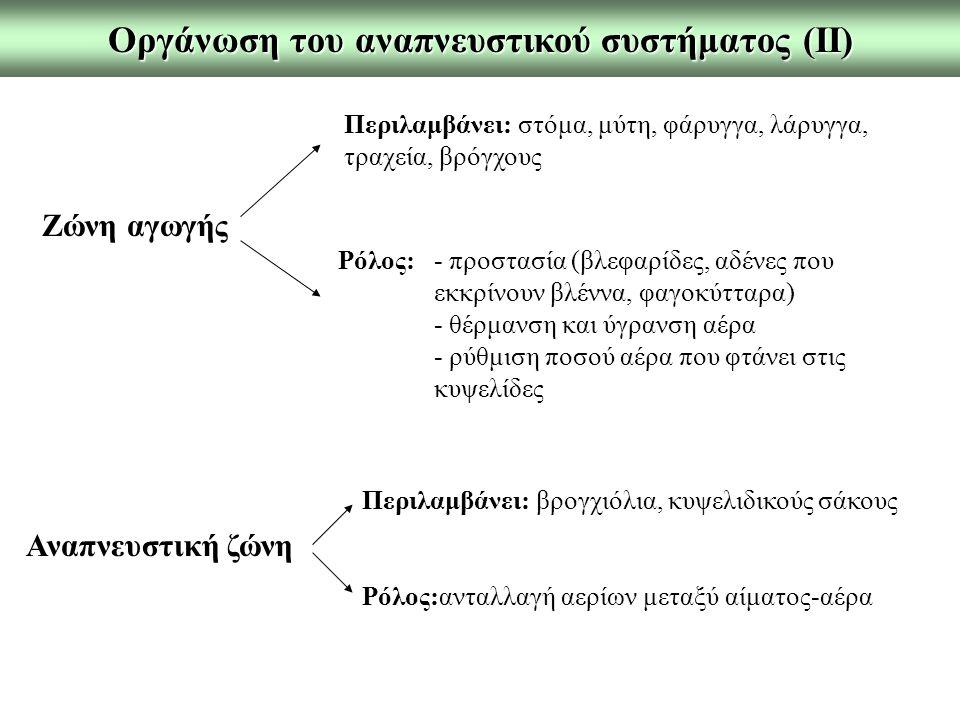 Η νευρογενής ρύθμιση της αναπνοής Αναπνευστικό κέντρο: εντοπίζεται αμφοτερόπλευρα στον προμήκη και τη γέφυρα Διακρίνεται: 1.ραχιαία αναπνευστική ομάδα νευρώνων (εισπνευστική κίνηση, κύρια ομάδα) 2.κοιλιακή αναπνευστική ομάδα νευρώνων (εκπνευστική και εισπνευστική κίνηση, επιπρόσθετη ενίσχυση εισπνοής) 3.πνευμοταξικό κέντρο (ρύθμιση ρυθμού και μορφής αναπνευστικών κινήσεων, αύξηση συχνότητας αν.