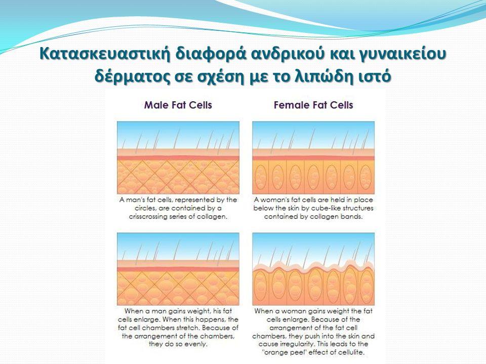 Κατασκευαστική διαφορά ανδρικού και γυναικείου δέρματος σε σχέση με το λιπώδη ιστό