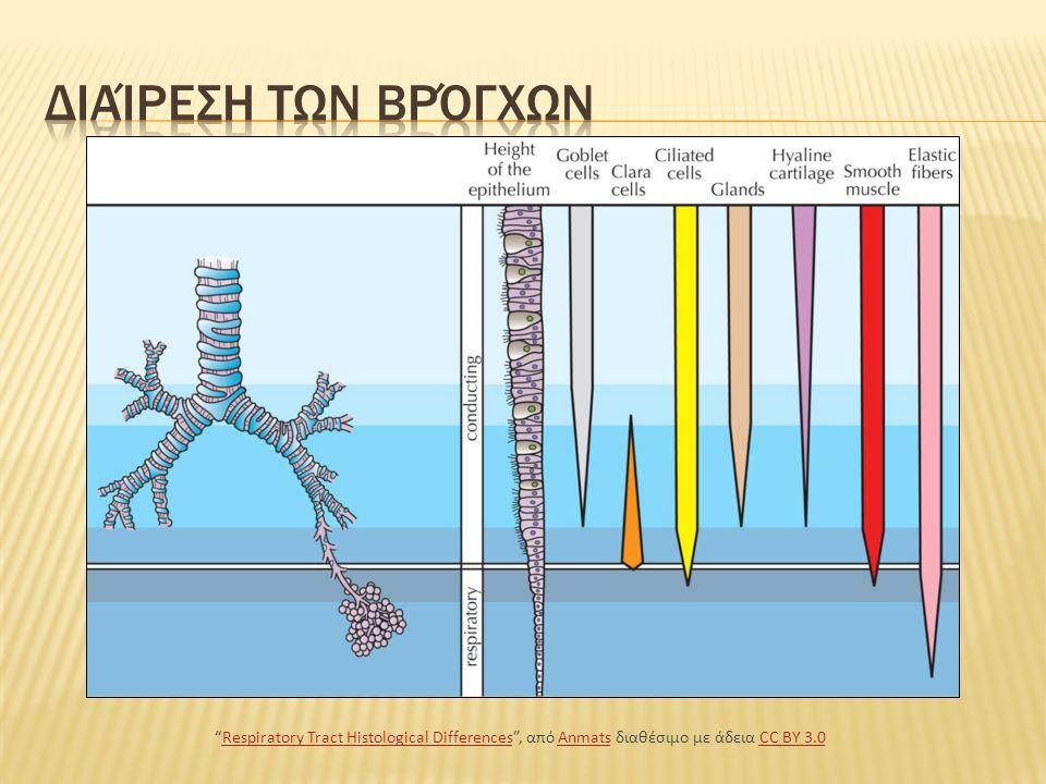 Το αναπνευστικό σύστημα αρχίζει από τη ρινική και τη στοματική κοιλότητα και υποδιαιρείται από λειτουργική άποψη σε τμήματα, τους αεραγωγούς και την περιοχή ανταλλαγής των αερίων.