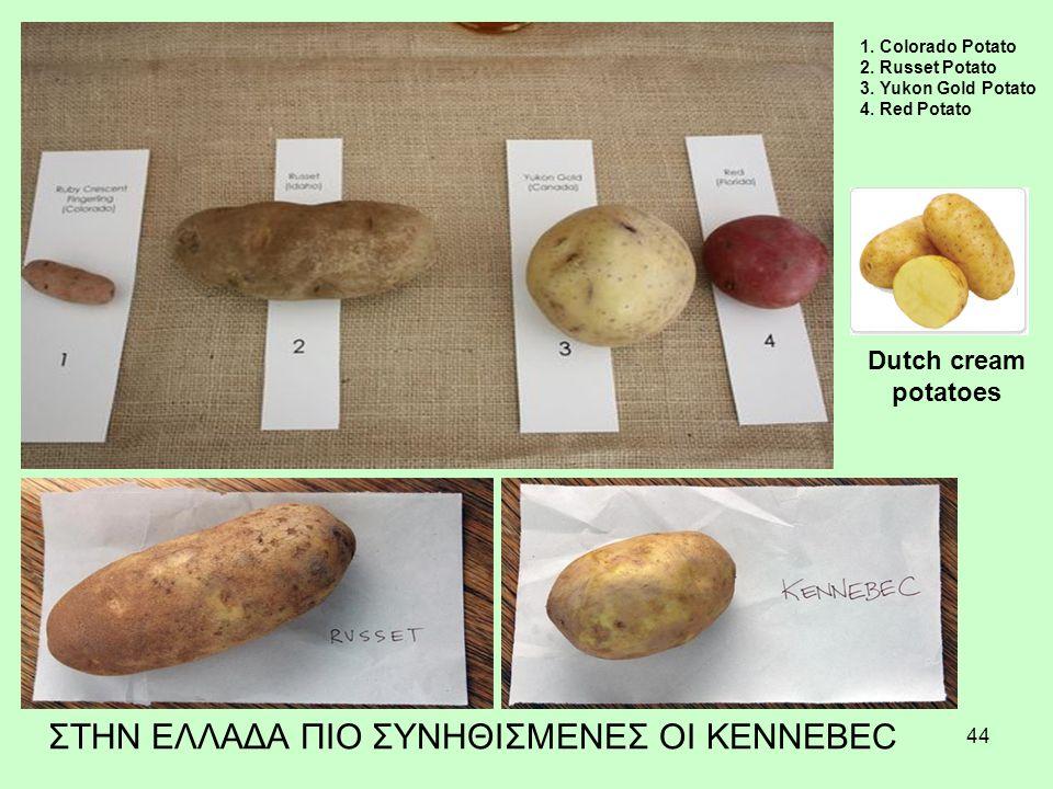 44 1.Colorado Potato 2. Russet Potato 3. Yukon Gold Potato 4.