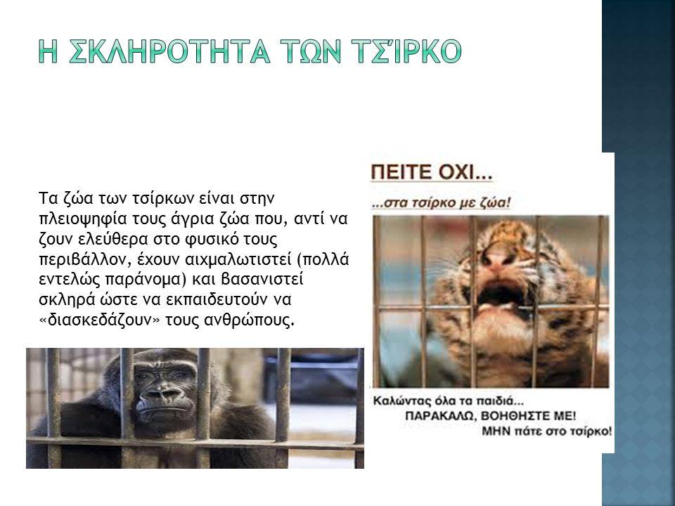 Τα ζώα των τσίρκων είναι στην πλειοψηφία τους άγρια ζώα που, αντί να ζουν ελεύθερα στο φυσικό τους περιβάλλον, έχουν αιχμαλωτιστεί (πολλά εντελώς παράνομα) και βασανιστεί σκληρά ώστε να εκπαιδευτούν να «διασκεδάζουν» τους ανθρώπους.