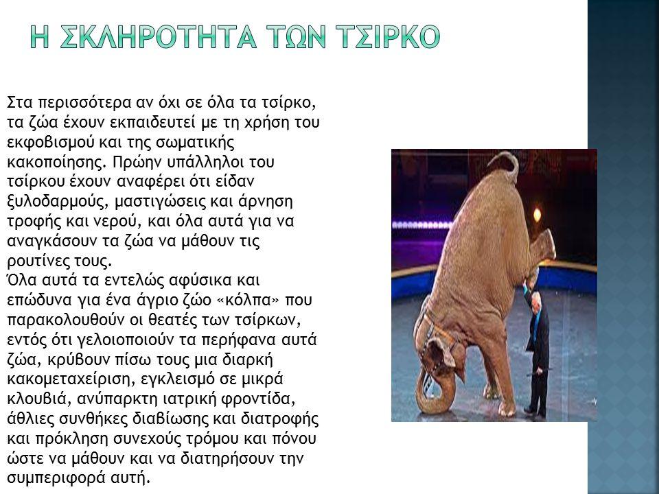 Στα περισσότερα αν όχι σε όλα τα τσίρκο, τα ζώα έχουν εκπαιδευτεί με τη χρήση του εκφοβισμού και της σωματικής κακοποίησης.