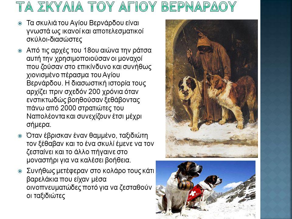  Τα σκυλιά του Αγίου Βερνάρδου είναι γνωστά ως ικανοί και αποτελεσματικοί σκύλοι-διασώστες  Από τις αρχές του 18ου αιώνα την ράτσα αυτή την χρησιμοποιούσαν οι μοναχοί που ζούσαν στο επικίνδυνο και συνήθως χιονισμένο πέρασμα του Αγίου Βερνάρδου.