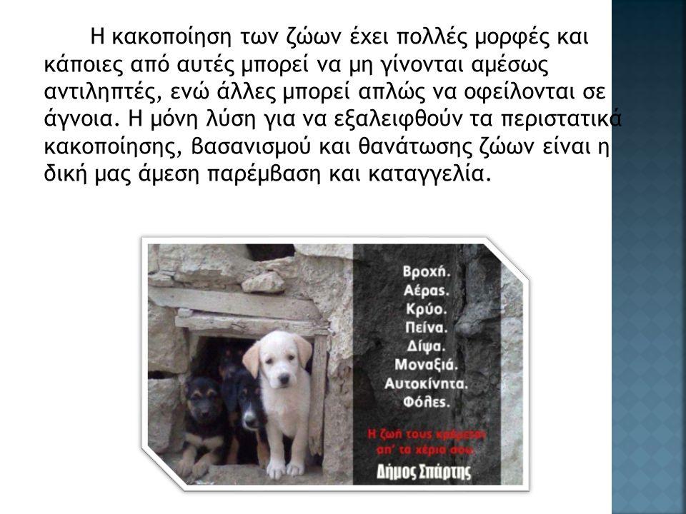 Η κακοποίηση των ζώων έχει πολλές μορφές και κάποιες από αυτές μπορεί να μη γίνονται αμέσως αντιληπτές, ενώ άλλες μπορεί απλώς να οφείλονται σε άγνοια