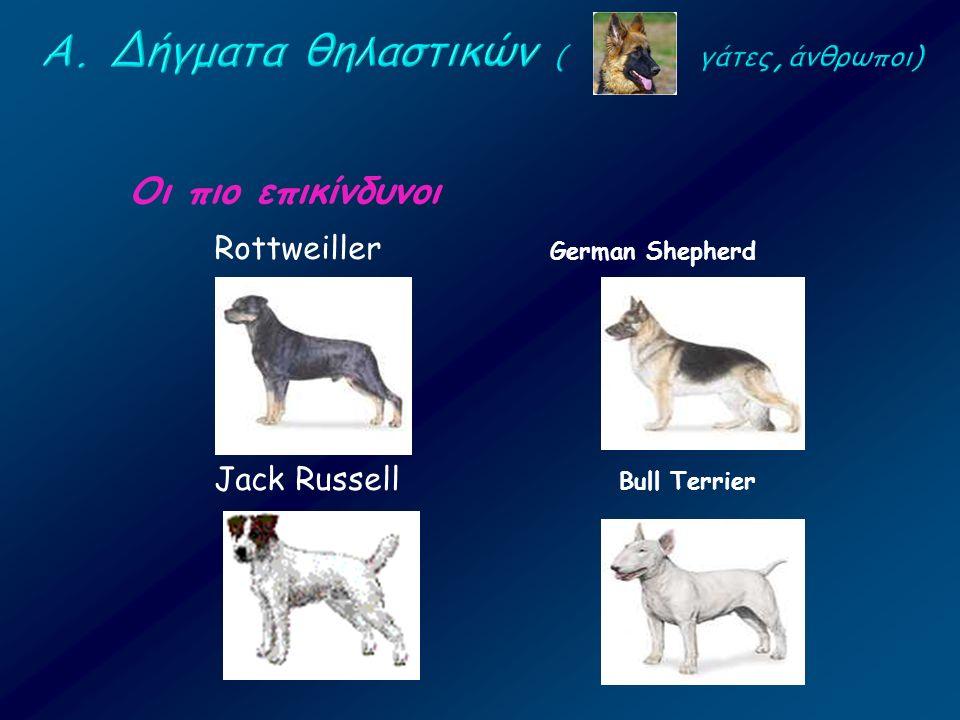 Οι πιο επικίνδυνοι Rottweiller Jack Russell German Shepherd Bull Terrier