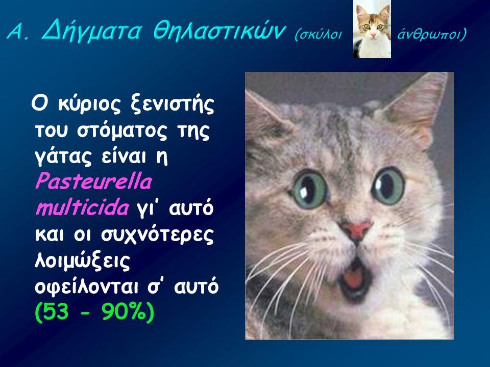 Ο κύριος ξενιστής του στόματος της γάτας είναι η Pasteurella multicida γι' αυτό και οι συχνότερες λοιμώξεις οφείλονται σ' αυτό (53 - 90%)