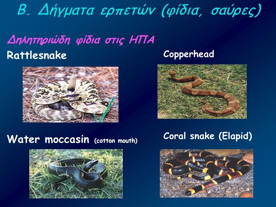 Δηλητηριώδη φίδια στις ΗΠΑ Rattlesnake Water moccasin (cotton mouth) Copperhead Coral snake (Elapid)