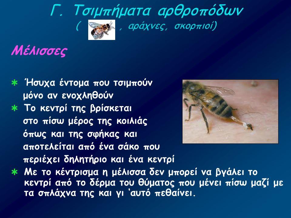 Μέλισσες  Ήσυχα έντομα που τσιμπούν μόνο αν ενοχληθούν  Το κεντρί της βρίσκεται στο πίσω μέρος της κοιλιάς όπως και της σφήκας και αποτελείται από έ