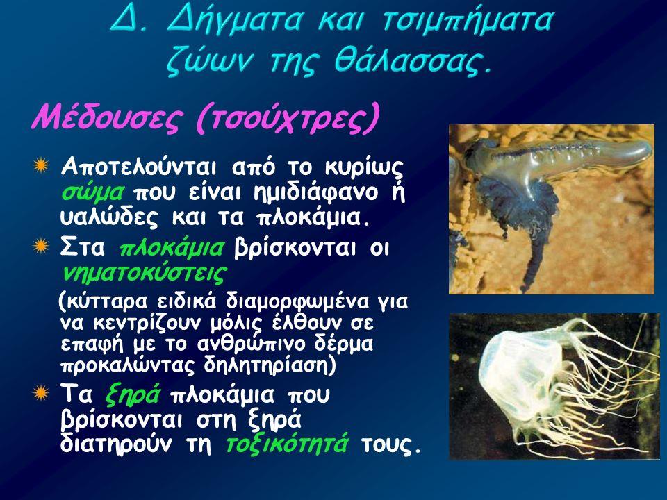 Μέδουσες (τσούχτρες)  Αποτελούνται από το κυρίως σώμα που είναι ημιδιάφανο ή υαλώδες και τα πλοκάμια.  Στα πλοκάμια βρίσκονται οι νηματοκύστεις (κύτ