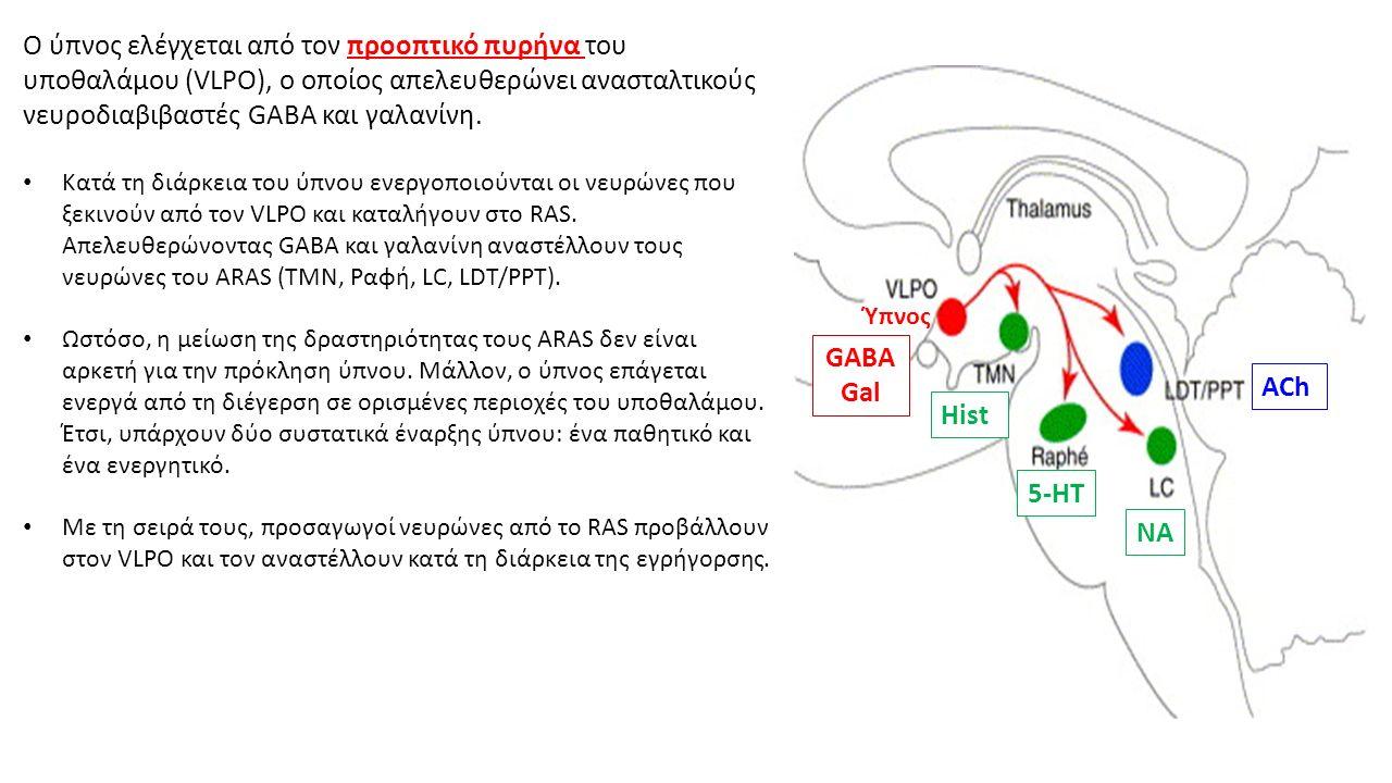 Ο ύπνος ελέγχεται από τον προοπτικό πυρήνα του υποθαλάμου (VLPO), ο οποίος απελευθερώνει ανασταλτικούς νευροδιαβιβαστές GABA και γαλανίνη.
