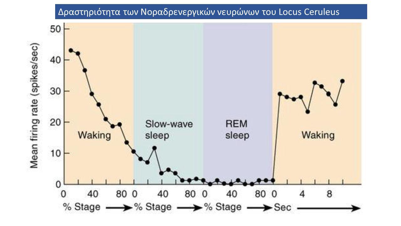 Δραστηριότητα των Νοραδρενεργικών νευρώνων του Locus Ceruleus