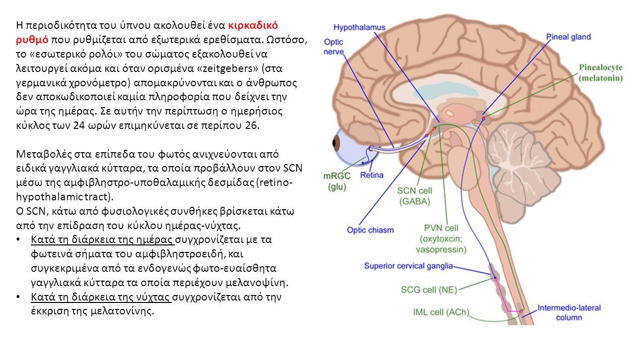 Η περιοδικότητα του ύπνου ακολουθεί ένα κιρκαδικό ρυθμό που ρυθμίζεται από εξωτερικά ερεθίσματα.