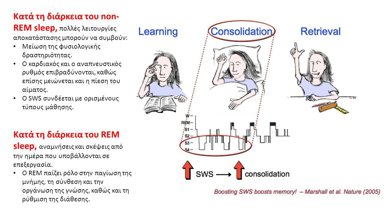 Κατά τη διάρκεια του non- REM sleep, πολλές λειτουργίες αποκατάστασης μπορούν να συμβούν: Μείωση της φυσιολογικής δραστηριότητας.
