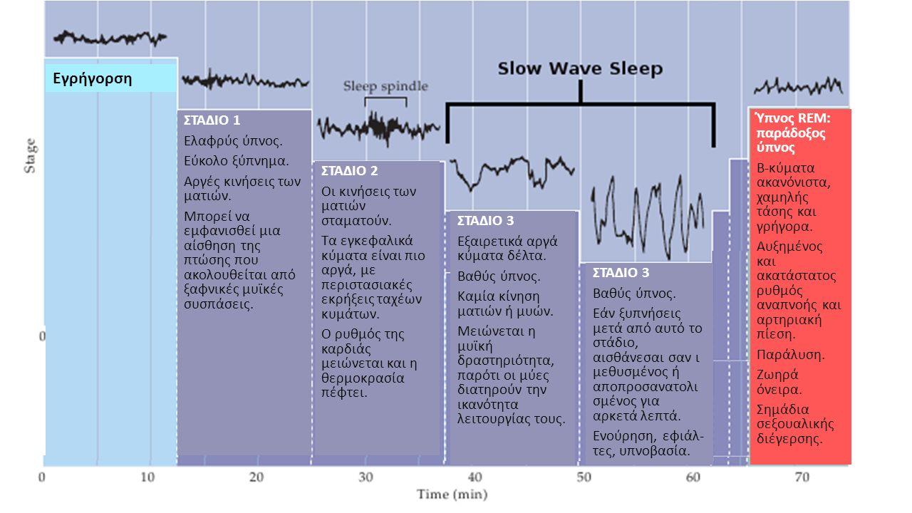 ΣΤΑΔΙΟ 1 Ελαφρύς ύπνος. Εύκολο ξύπνημα. Αργές κινήσεις των ματιών.