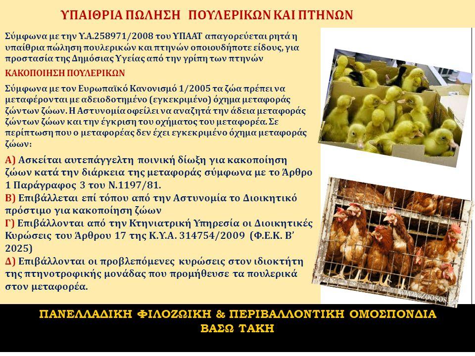 ΥΠΑΙΘΡΙΑ ΠΩΛΗΣΗ ΠΟΥΛΕΡΙΚΩΝ ΚΑΙ ΠΤΗΝΩΝ Σύμφωνα με την Υ.Α.258971/2008 του ΥΠΑΑΤ απαγορεύεται ρητά η υπαίθρια πώληση πουλερικών και πτηνών οποιουδήποτε είδους, για προστασία της Δημόσιας Υγείας από την γρίπη των πτηνών ΚΑΚΟΠΟΙΗΣΗ ΠΟΥΛΕΡΙΚΩΝ Σύμφωνα με τον Ευρωπαϊκό Κανονισμό 1/2005 τα ζώα πρέπει να μεταφέρονται με αδειοδοτημένο (εγκεκριμένο) όχημα μεταφοράς ζώντων ζώων.
