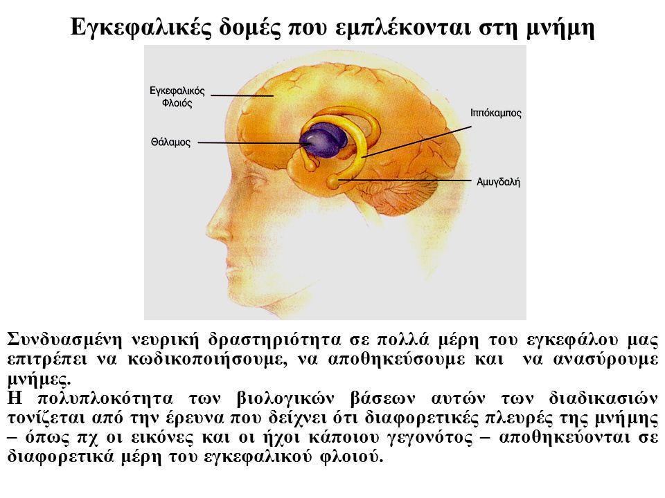 Εγκεφαλικές δομές που εμπλέκονται στη μνήμη Συνδυασμένη νευρική δραστηριότητα σε πολλά μέρη του εγκεφάλου μας επιτρέπει να κωδικοποιήσουμε, να αποθηκε