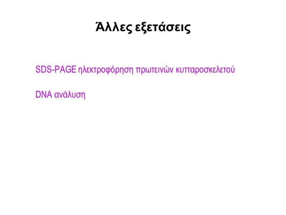 Άλλες εξετάσεις SDS-PAGE ηλεκτροφόρηση πρωτεινών κυτταροσκελετού DNA ανάλυση