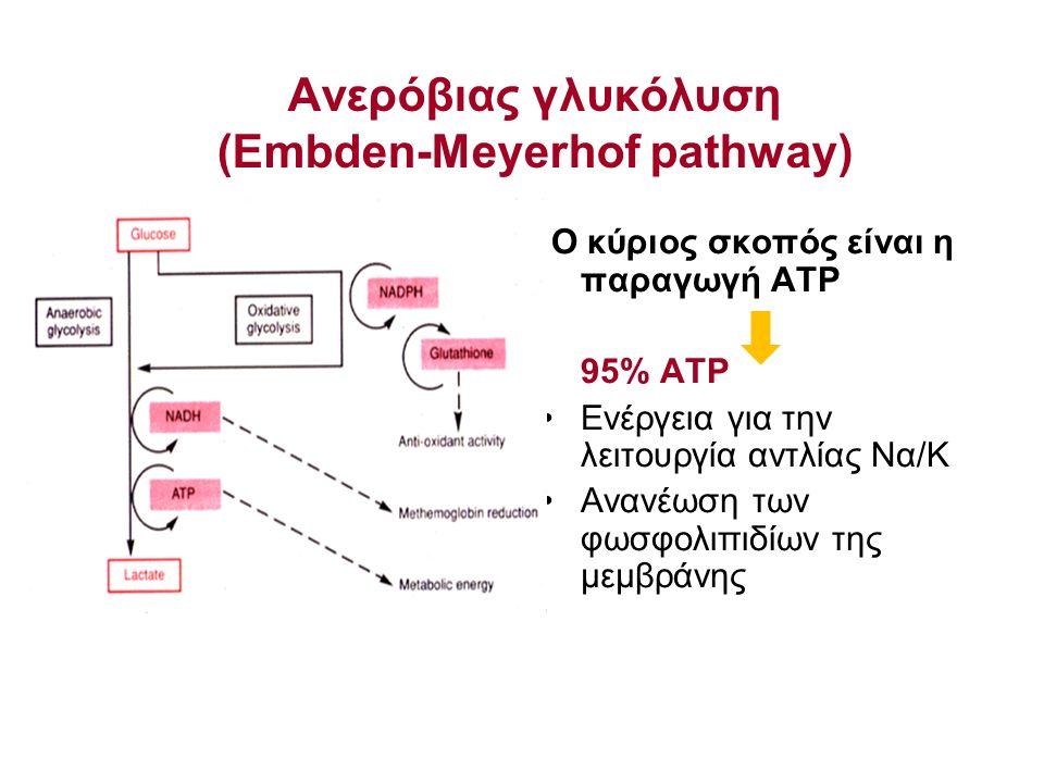 Ανερόβιας γλυκόλυση (Embden-Meyerhof pathway) Ο κύριος σκοπός είναι η παραγωγή ATP 95% ATP Ενέργεια για την λειτουργία αντλίας Να/Κ Ανανέωση των φωσφο